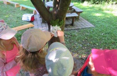Vier Wochen lang entdeckten die Kinder die Natur rund um den Kreuzberg.